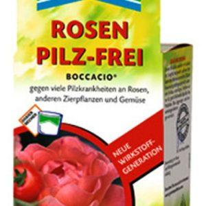 Rosen Pilzfrei von Weinsberger Rosen