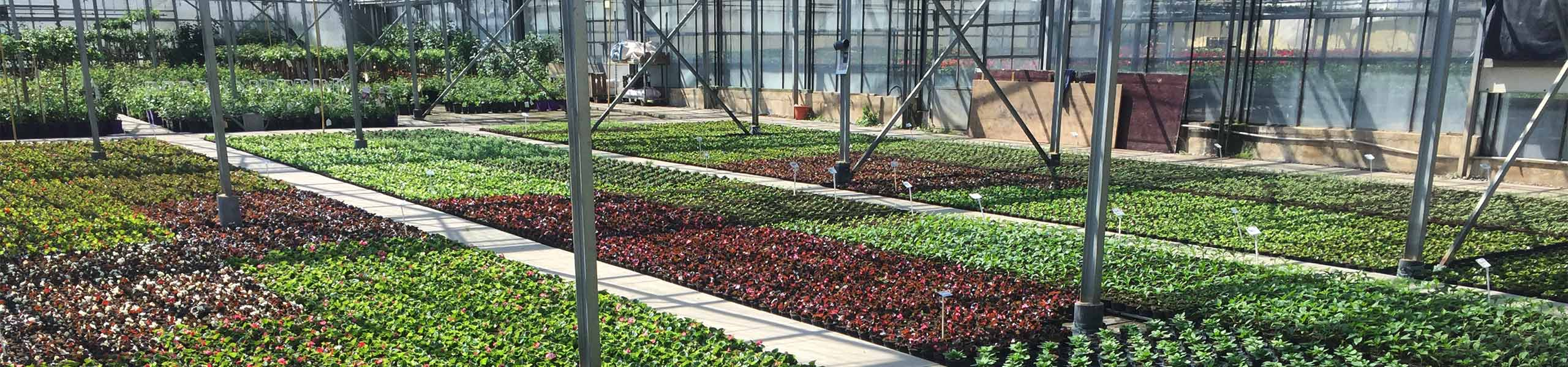 Gärtnerei der Weinsberger Rosenkulturen GbR